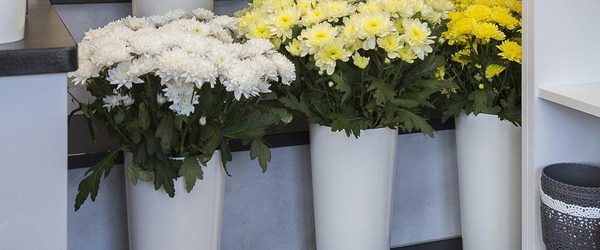 Kwiaciarnia Hibiskus